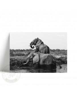 Lámina Horizontal Elefante