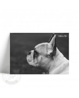 Lámina Horizontal Bulldog Frances